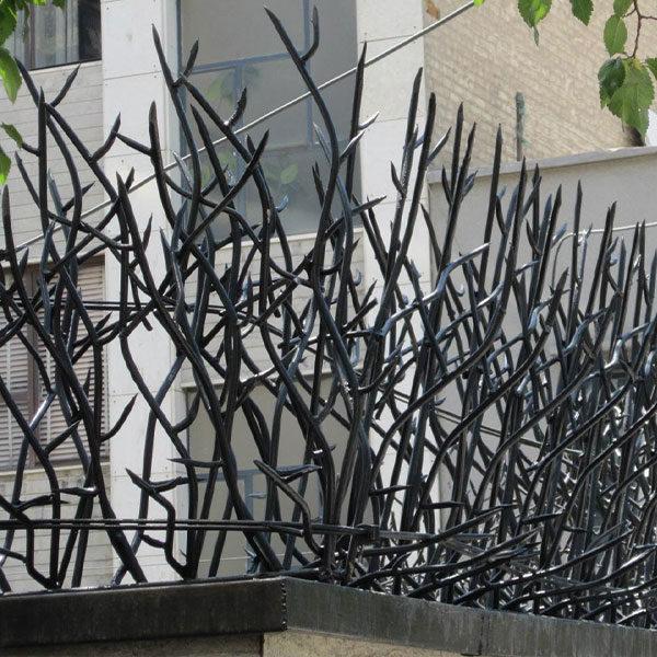 حفاظ شاخ گوزنی از نزدیک